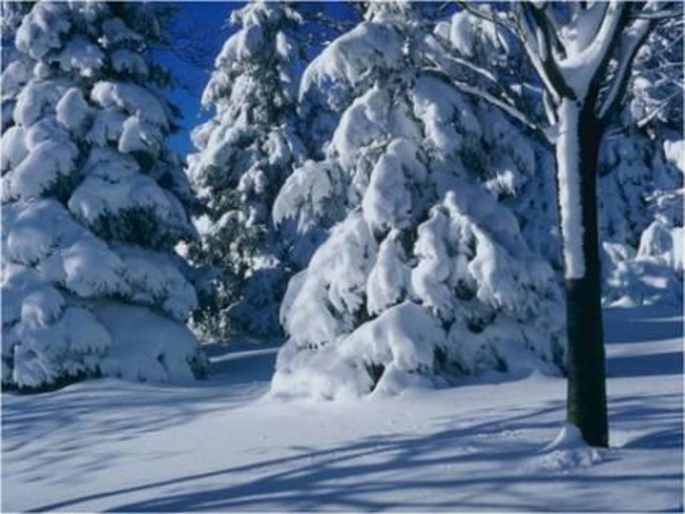Изменения в неживой природе зимой картинки