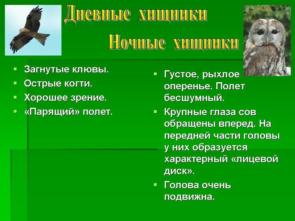 Многообразие птиц. 7-й класс