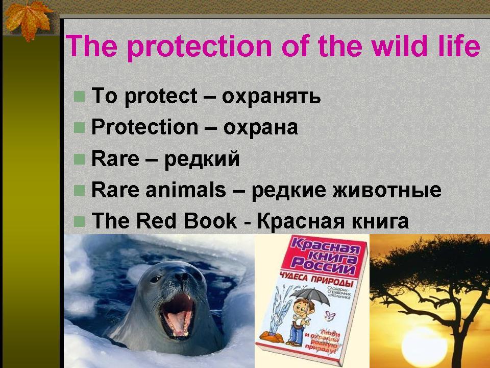 Картинки плакаты береги природу на английском языке