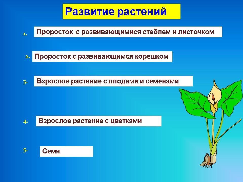 Презентация к уроку.