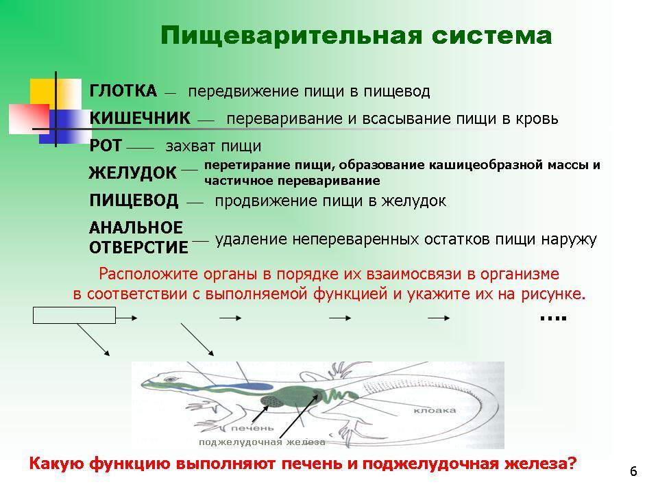 Видеоурок по истории 9 класс история россии