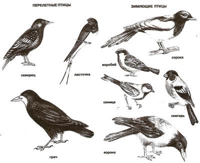 картинки птиц перелетных