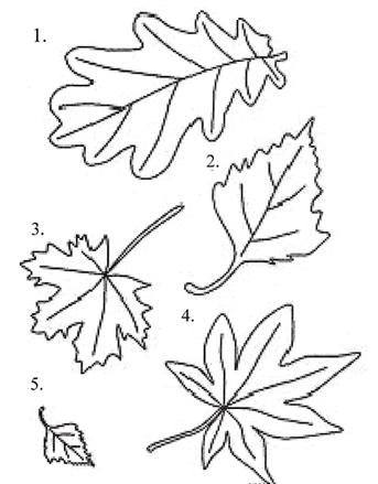 листья клена дуба березы рябины рисунки проводы