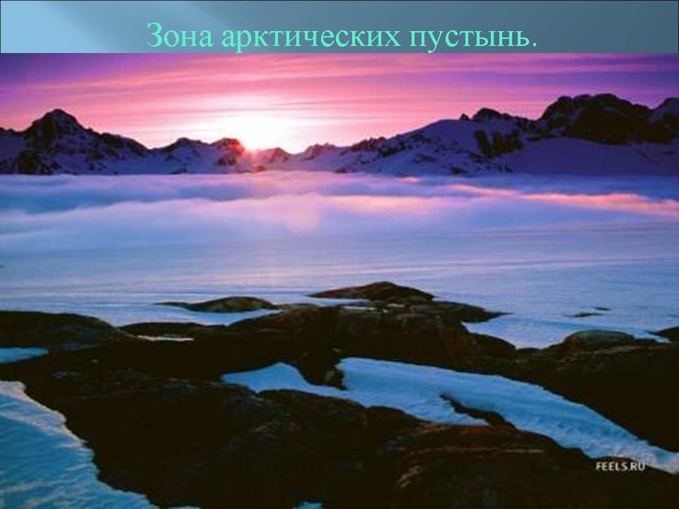 На тему зона арктических пустынь