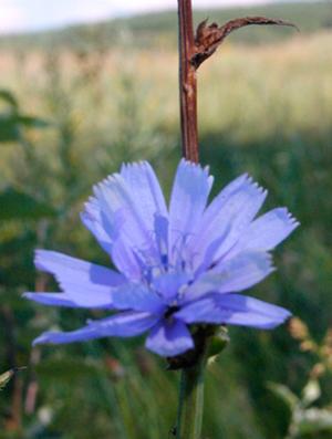 лечебные растения фото и описание