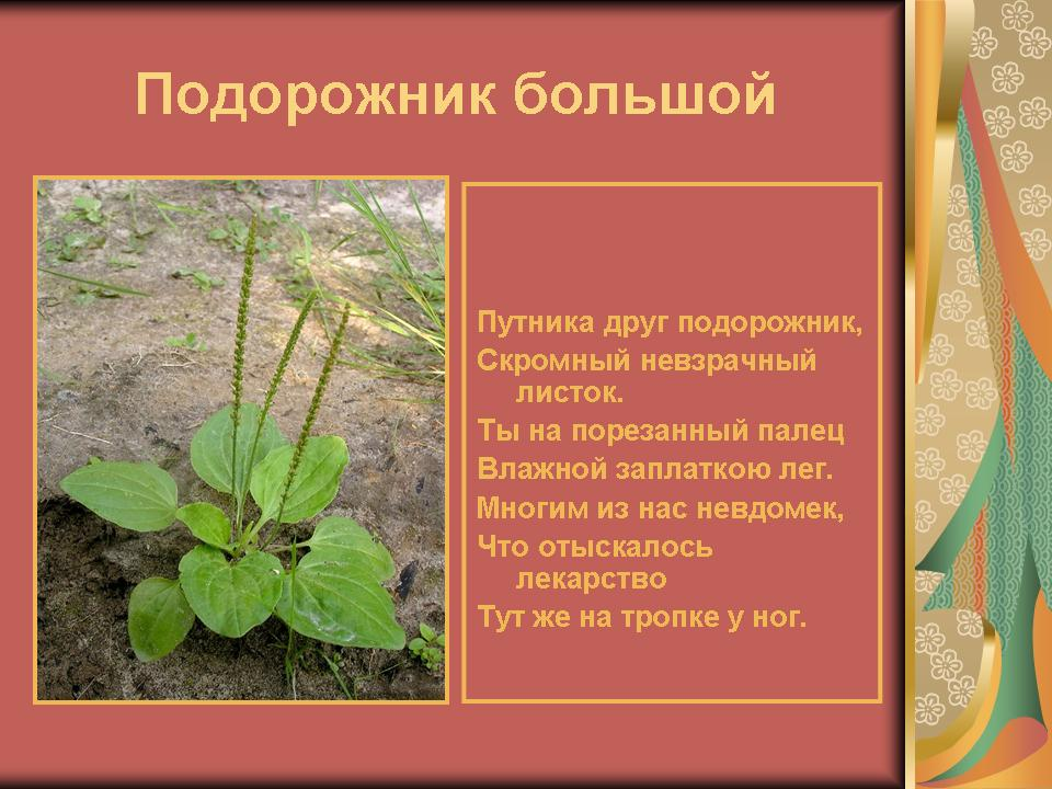 На тему лекарственные растения