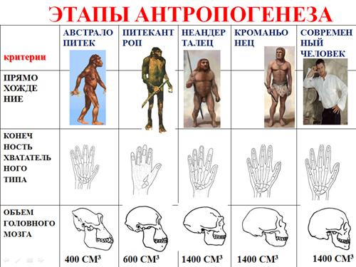 эволюции человека.