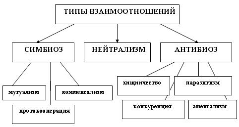 систематических групп.