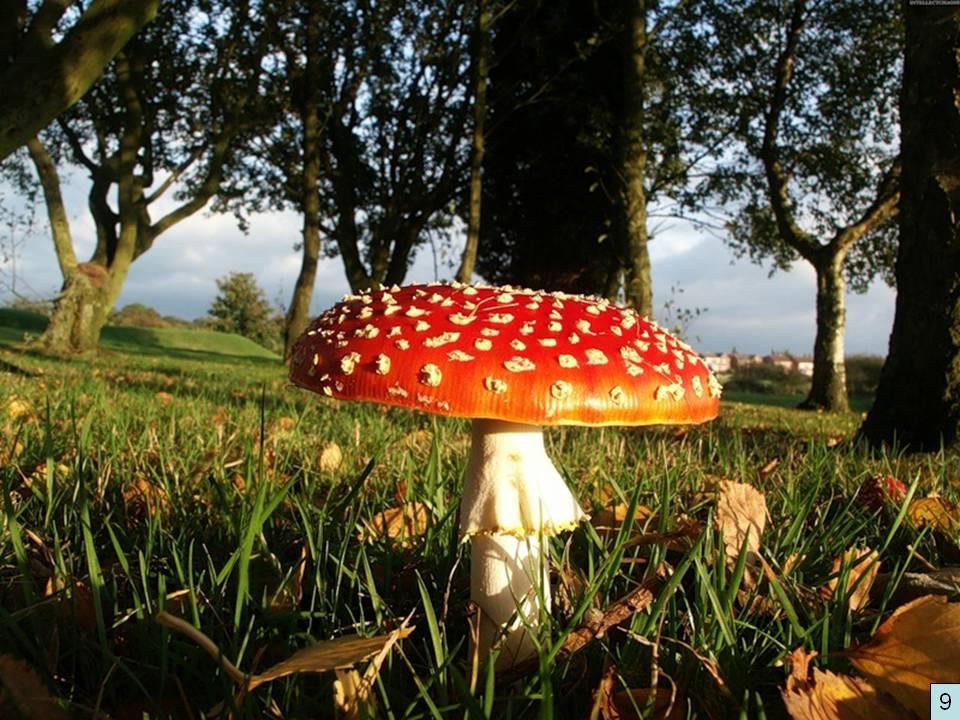 конспект коррекционного занятия грибы ягоды