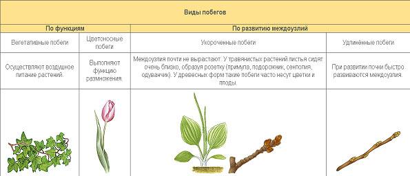 (Вегетативные и генеративные)