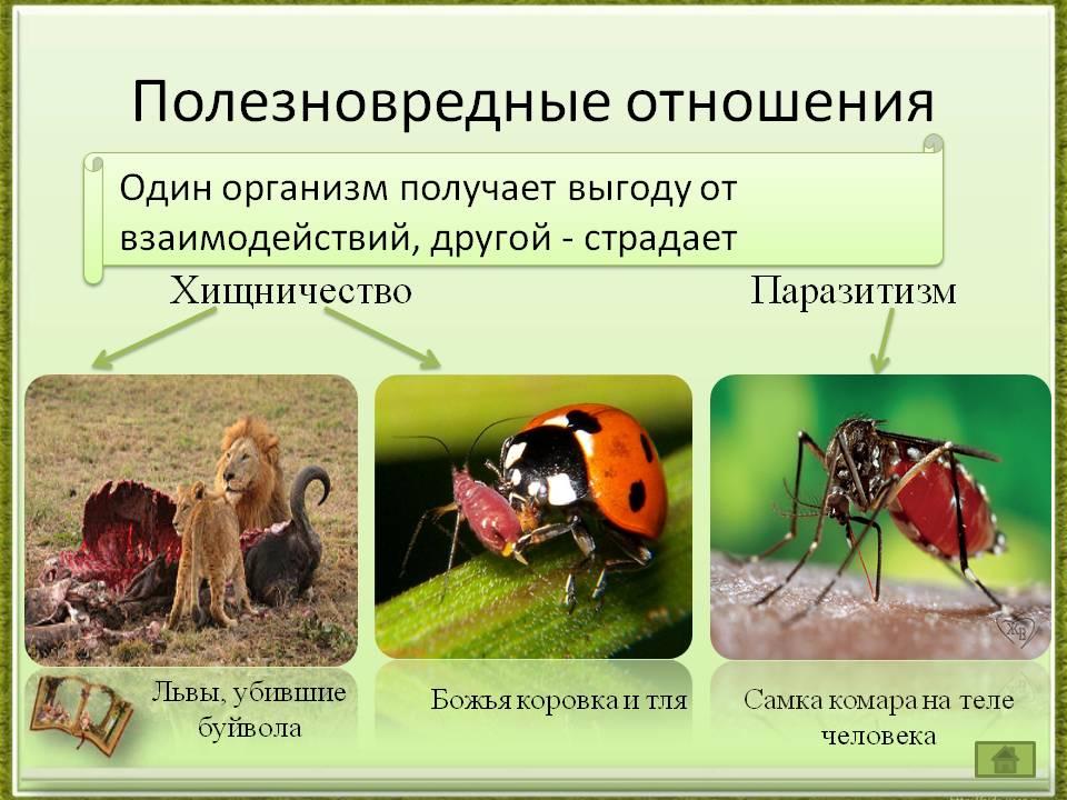 Виды взаимосвязь животных друг с другом голое