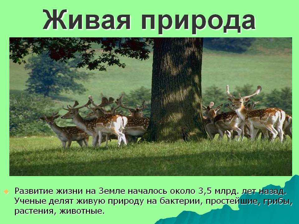 Презентации на тему живая природа