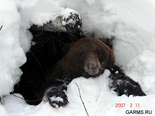 Картинки животных зимой в лесу