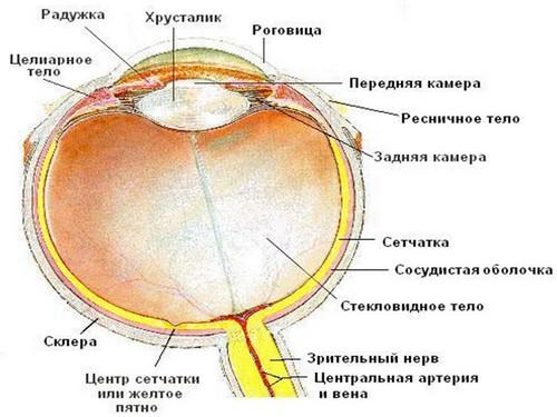 Курсы коррекции зрения бейтса