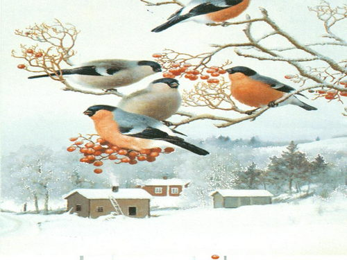 Картинки птиц зимой для защиты от холода