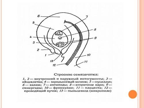 Техническая карта урока по теме