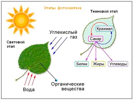 Разработка урока биологии по