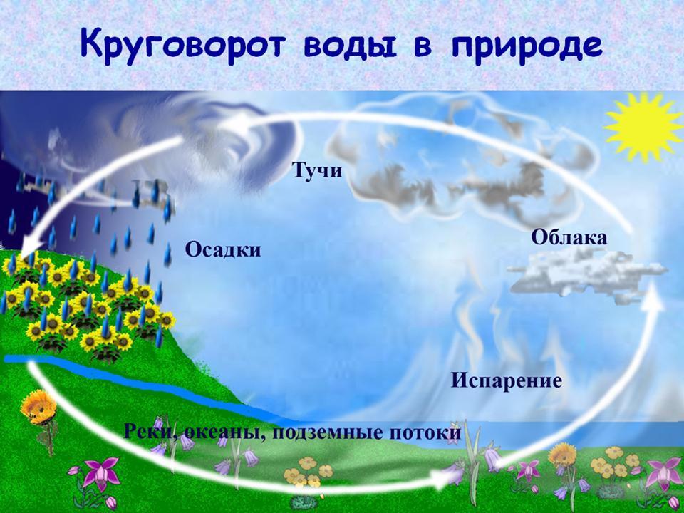 Схема окружающего мира 1 класс