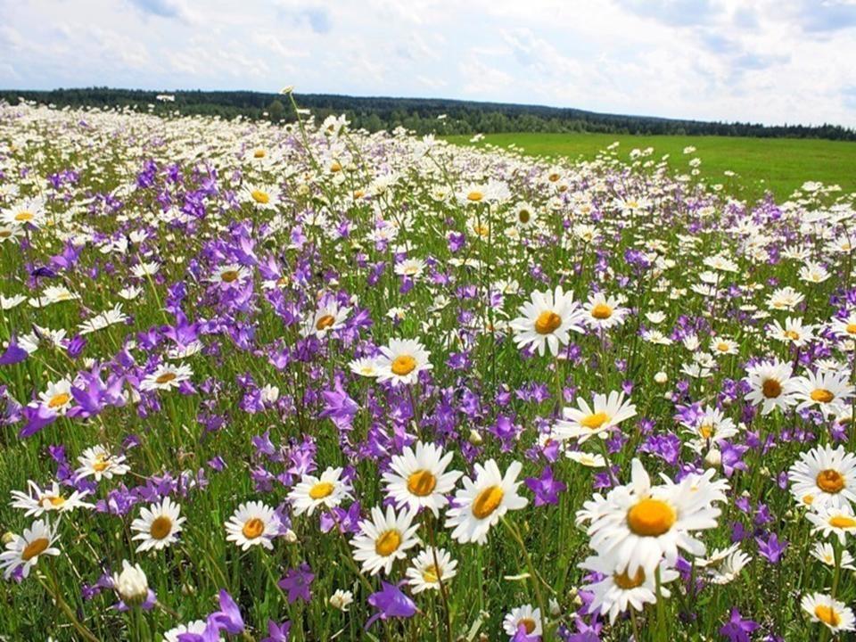 Цветок россии картинки