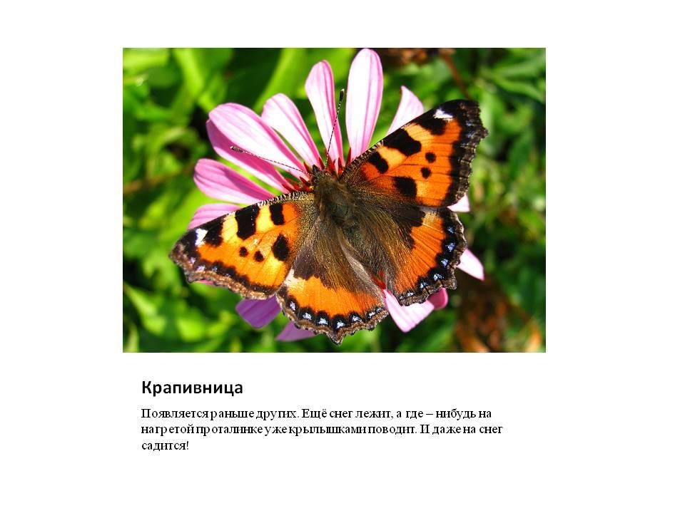 Картинки как всречают весну насекомые и звери
