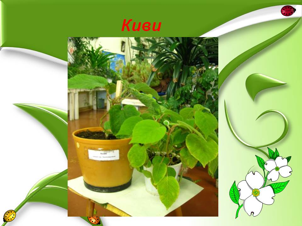 знакомство с растениями луга