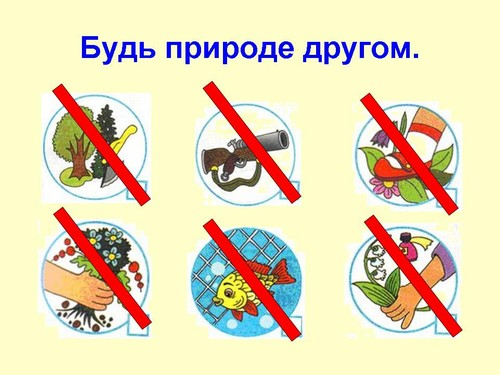 Картинки экологические знаки правила друзей природы
