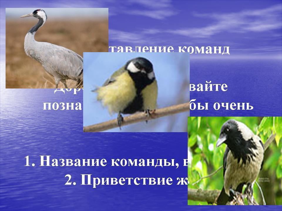 презентация по биологии птицы просмотр