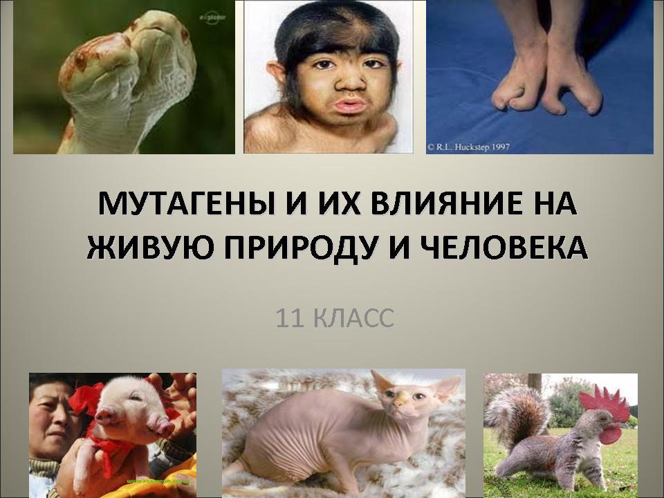 Влияние мутагенов на организм человека реферат 597