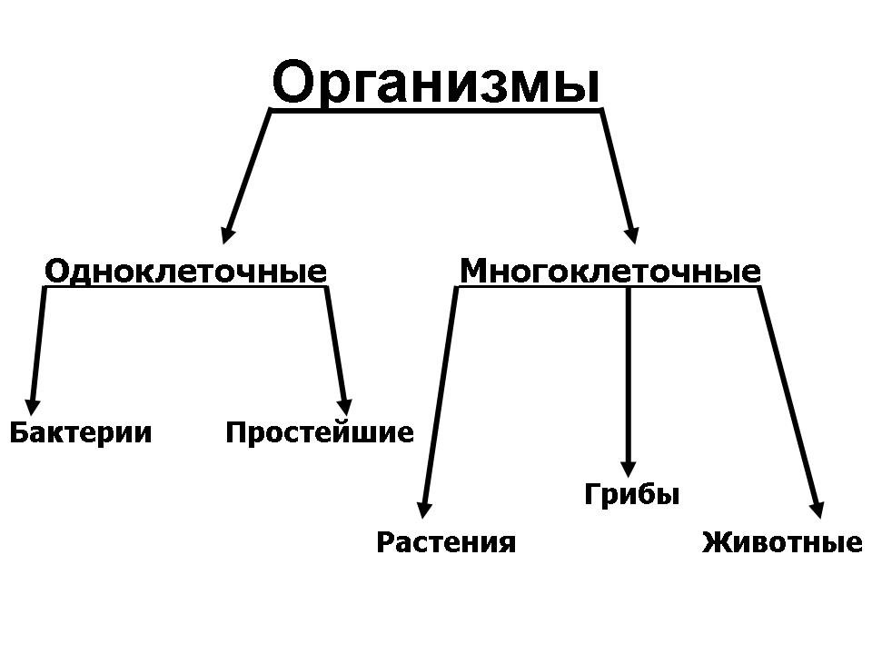 Одноклеточный