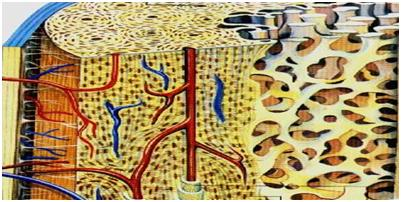 остеопороз в Херсоне