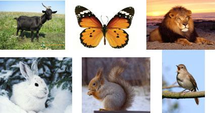 Картинки по запросу кто такие звери