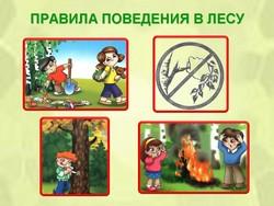 правила поведения для детей в картинках в лесу