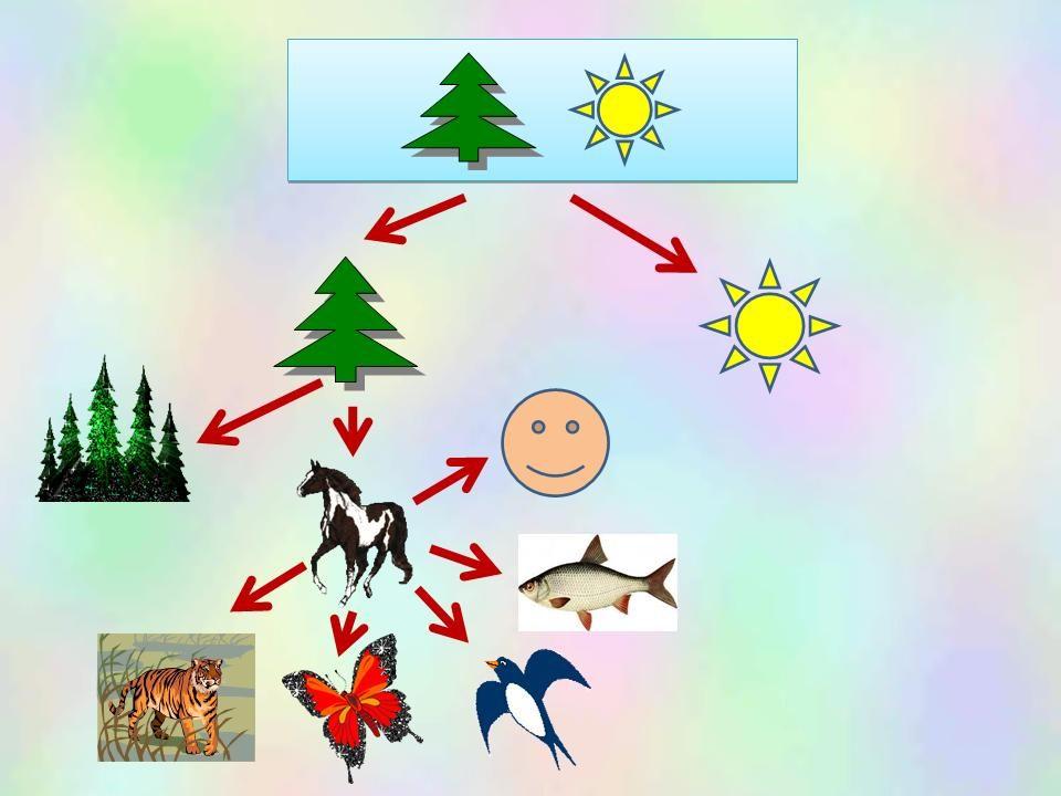 Живая и неживая природа схема картинки