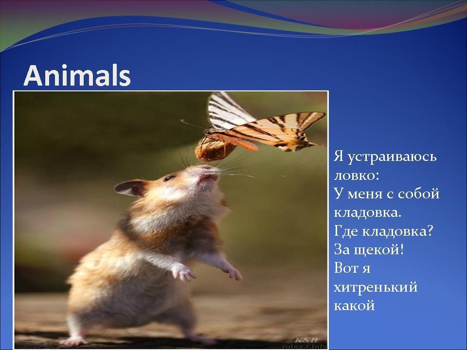 Презентация По Английскому Языку На Тему Домашние Животные