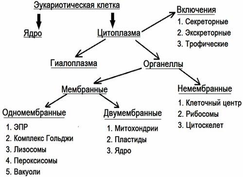 """""""Строение и функции ядра""""."""