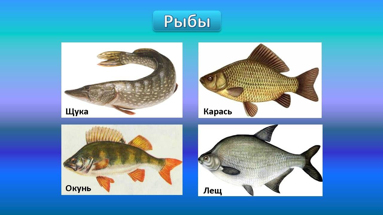 животные морей презентация