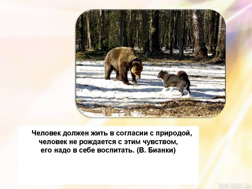 Картинки на тему мы защищаем природу