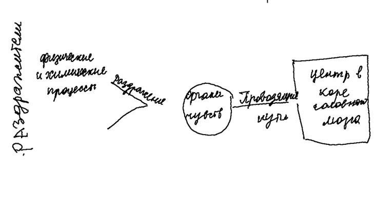 """""""Схема строения анализаторов"""""""