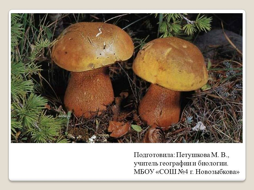 Биология в схемах и таблицах ионцева торгалов фото 709