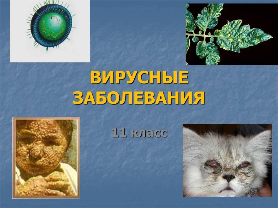 Современные вирусные заболевания доклад 6635