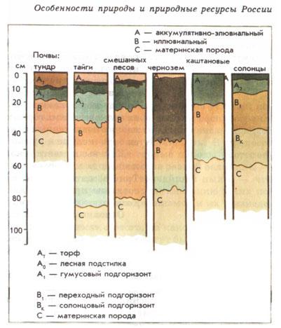 Каковы отличия строения почв