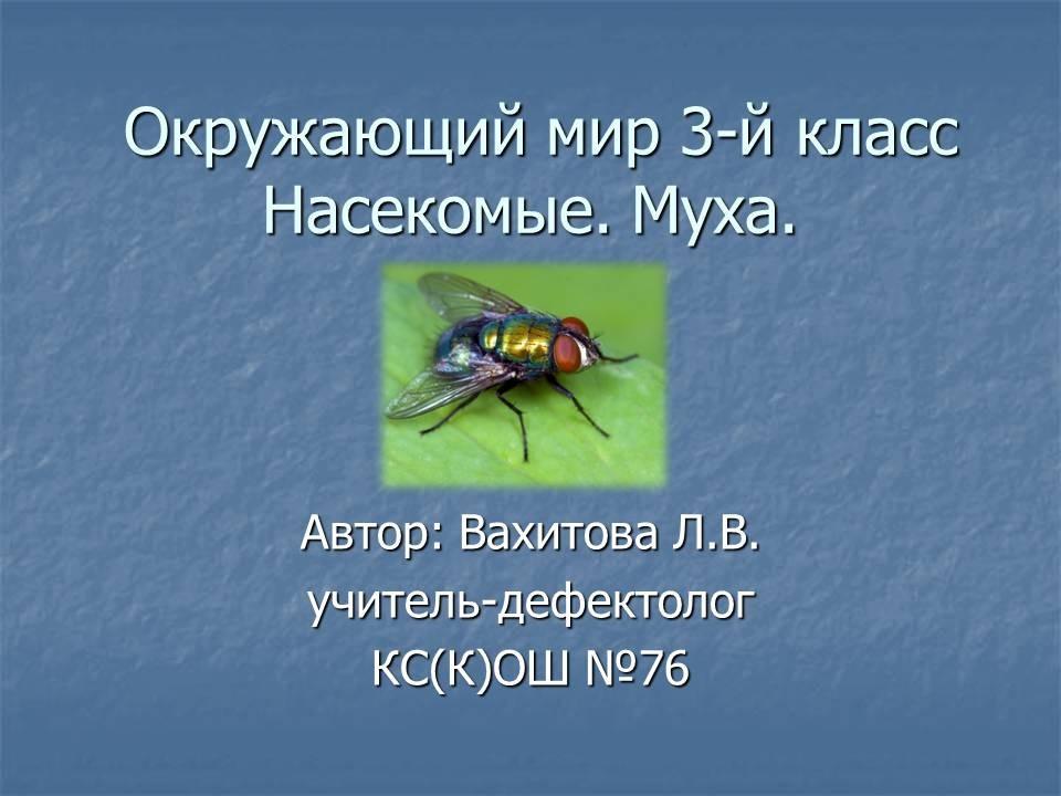 Презентацию на тему насекомые 3 класс