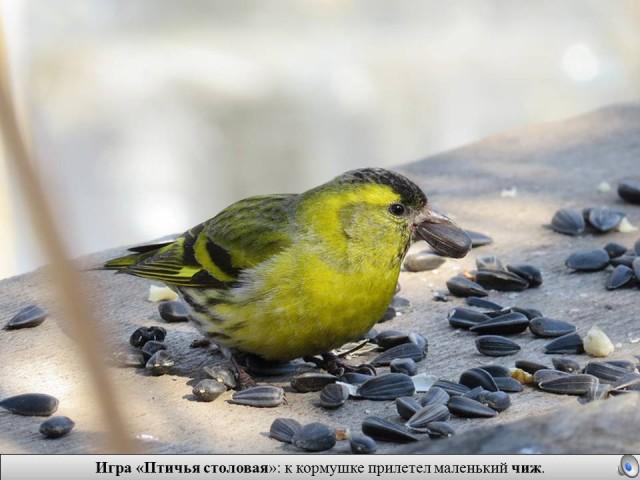 птицы зимующие птицы для знакомство дошкольников