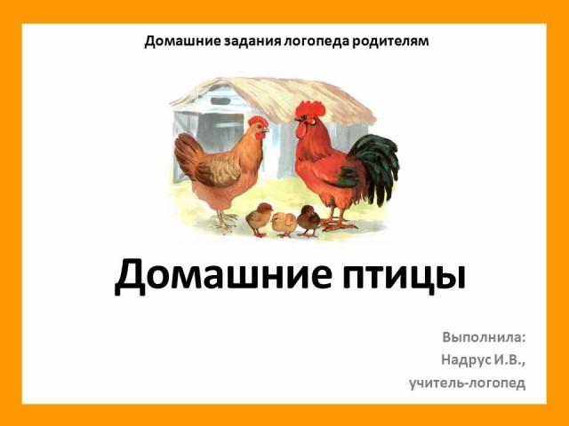 Рисунки птицы карандашом для детей (33 фото) 🔥 Прикольные картинки и юмор | 480x640