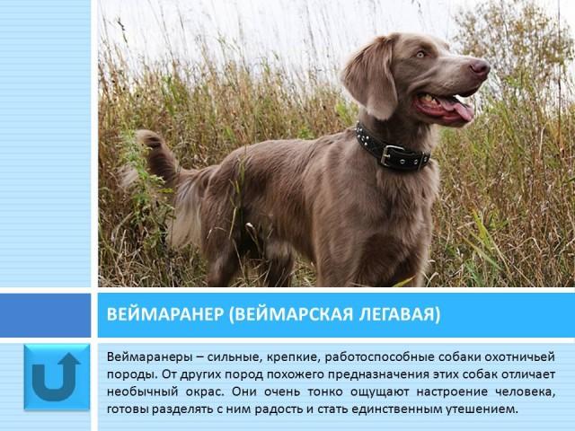 Презентация Про Кошек И Собак
