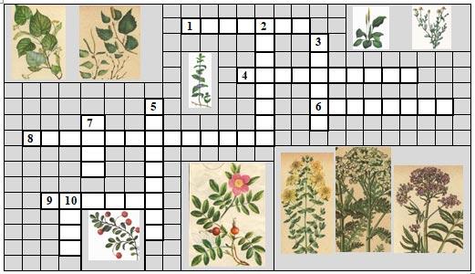 кроссворды о растениях в картинках разукрашки всех